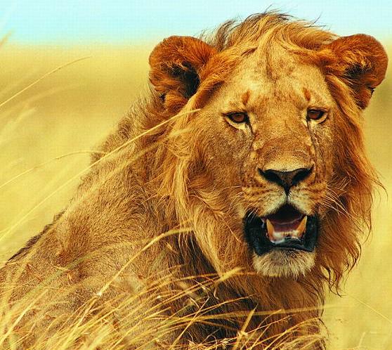 【狮吼tv】狮后的丧礼