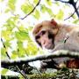 瘸腿图片_瘸腿猴子找工作