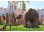 【夹城里小学】城里的大象